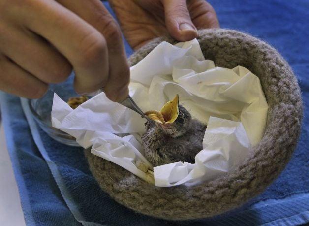 Knit a nest, save a bird!