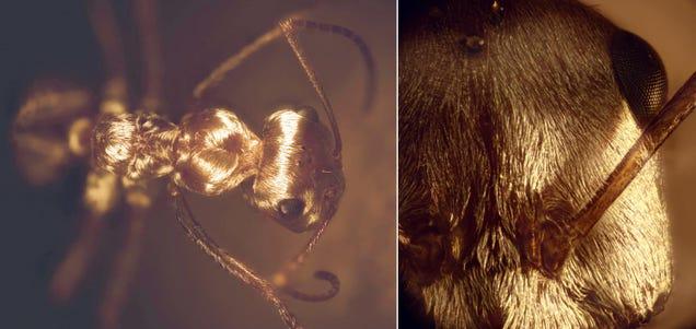 Una hormiga plateada aporta la clave para nuevos materiales aislantes