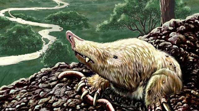 This 'grave robbing' mammal outsmarted the dinosaurs by going underground