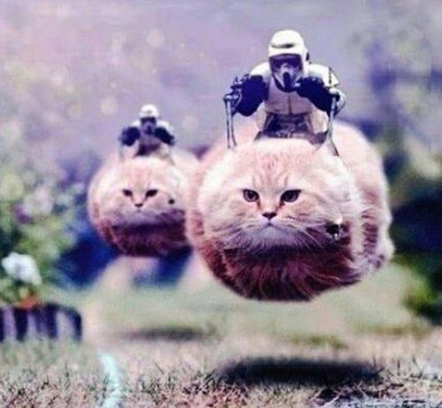Star Wars 7?