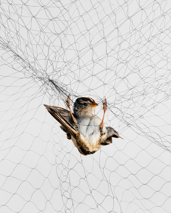 Uncanny photographs capture beautiful birds as they struggle for freedom