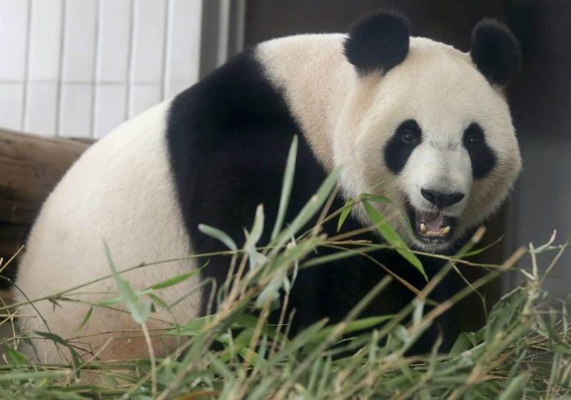 Former French President Admits He Was Attacked By a Panda