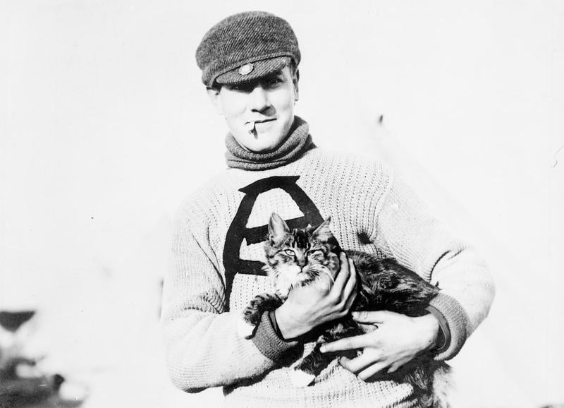 These Are the Brave and Fluffy Cats Who Served in World War I