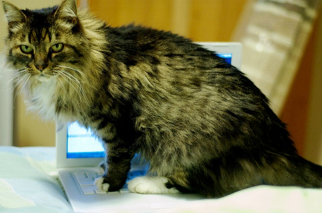 Study backs up what owners already know: Cats don't care