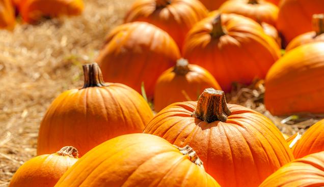 Jerk Steals Pumpkins from Garden of Preschoolers in New Mexico