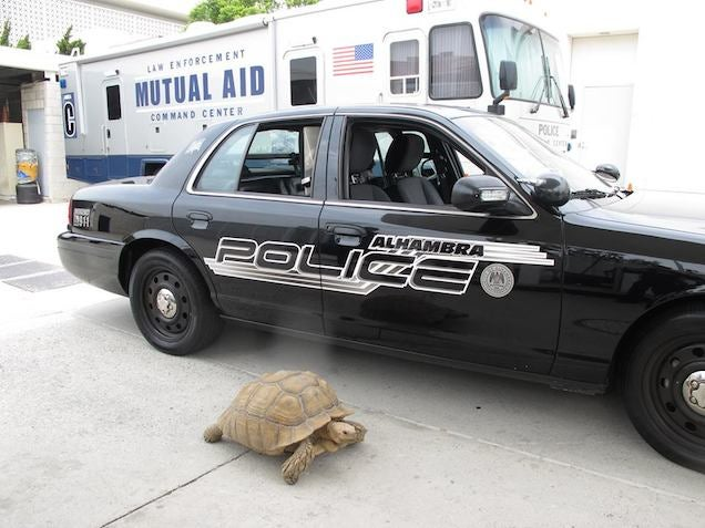 California Police Reunite Lost 150-Pound Tortoise With Family