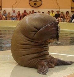 Behold: The World's Saddest Walrus