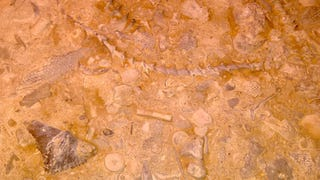 What Creatures Can You Identify In This Fossilized Sea Floor?