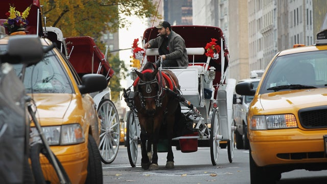 A Carriage Horse Tore Through NYC Thursday, Colliding with Cars, Injuring Tourists