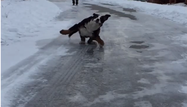 This Giant Dog Sliding on Ice in Slow Motion is Positively Hypnotic
