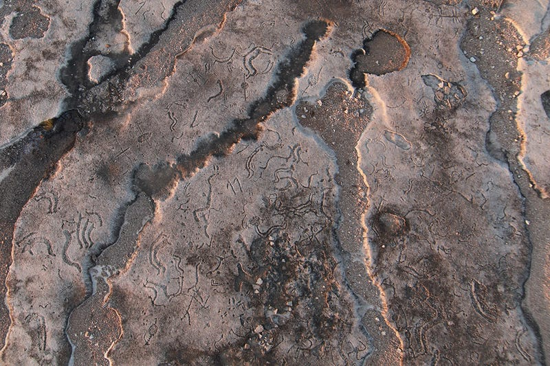 36-Gigapixel Image Captures Ancient Petroglyphs in Texas