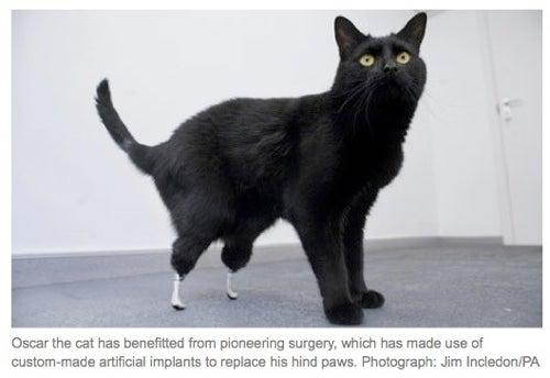 Artificial Cat Legs Help Kitty Walk Again