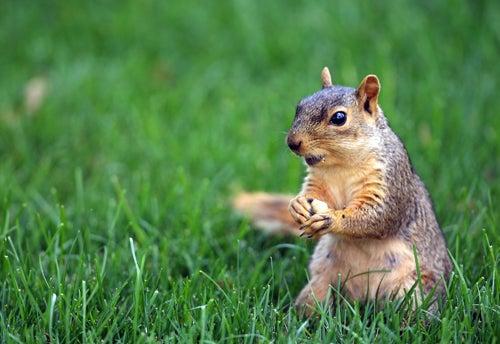 Greenwich Village Squirrel Massacre Divides Community