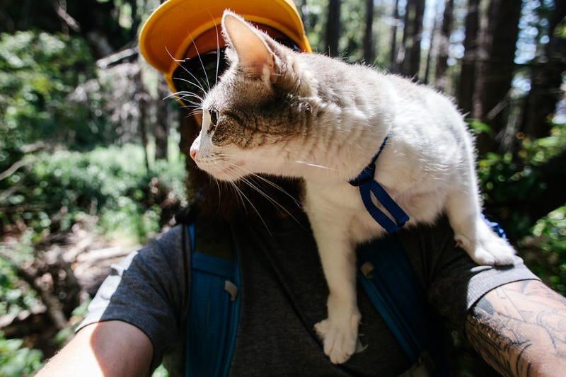 How To Take Your Cat Camping
