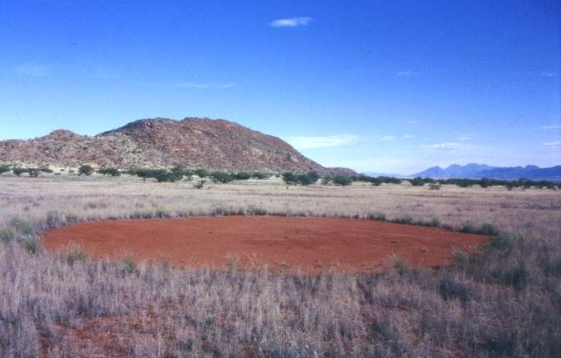 The mysterious fairy circles of Namibia