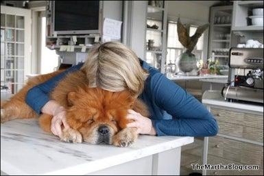 Sad Martha Stewart's Dead-Dog Blogging is Trying to Break Our Heart