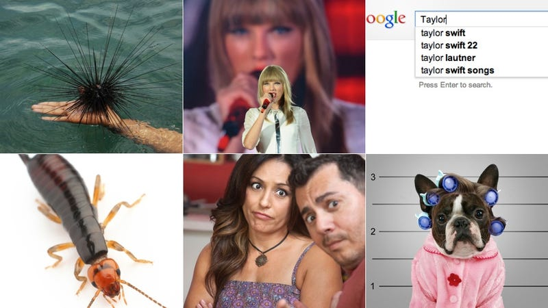 Taylor Swift's Top 5 Fears: A Collage