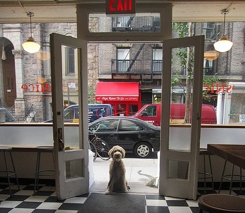 Should Restaurants Allow Pets?