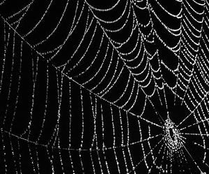 Secret To Spider-Glue Discovered