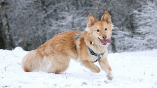 Dogs Could Love Frolicking In Snow Simply Because It's New