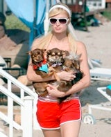 Paris Hilton Denies Feeding Dogs To Coyotes