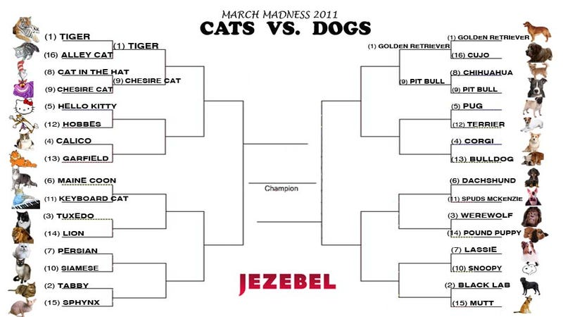 Cats vs. Dogs: An Intense Double-Header
