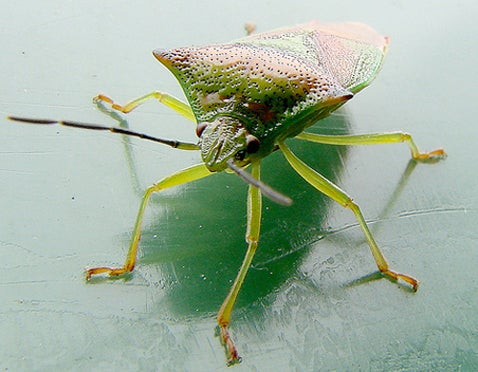 Bugs Cause 650,000 Accidents