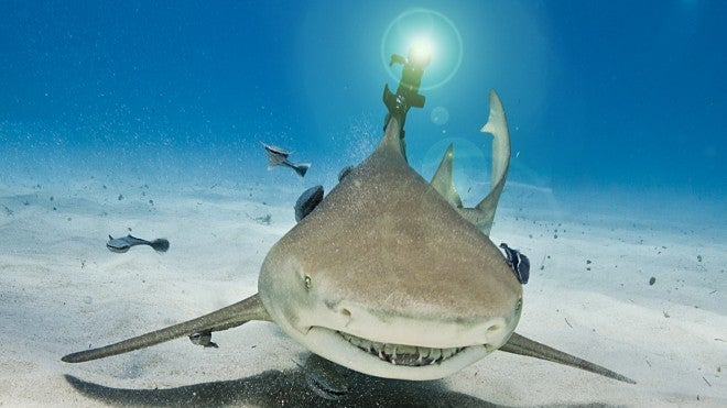 Real Lasers on Actual Sharks