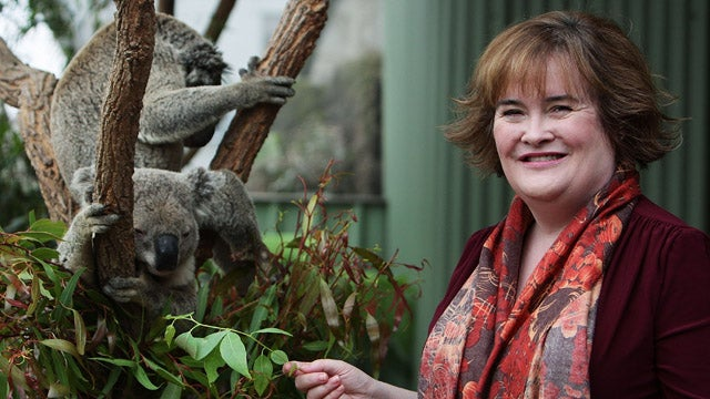 Susan Boyle Spends Some Koala-ity Time In Australia