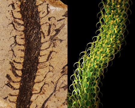 An Incredibly Life-Like Reconstruction Of A 400 Million-Year-Old Plant