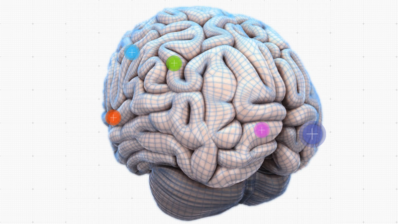 Explore Your Lobes And Cortices With This Interactive Brain Map