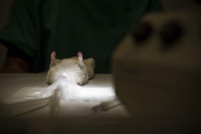 The Big Sleep: How Hibernation Could Overcome Life-Threatening Injury
