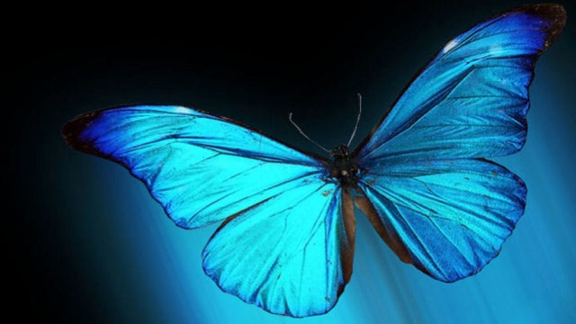 This butterfly could hold the secret to letting you see in the dark