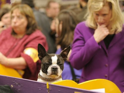 There Were No Losers At The Westminster Dog Show