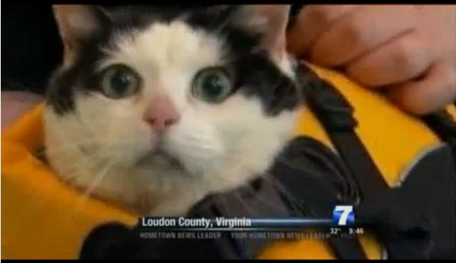 News Anchor Can't Get Through Segment on Swimming Cat Without Cracking Up