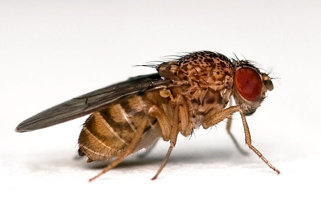 The crazy device that shows fruit flies have free will