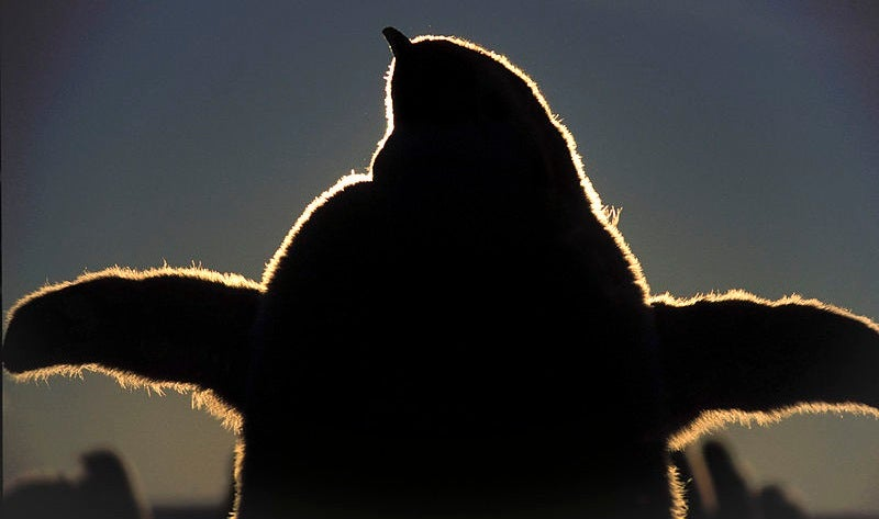 This Extinct Penguin Was the Best Animal To Waddle the Earth