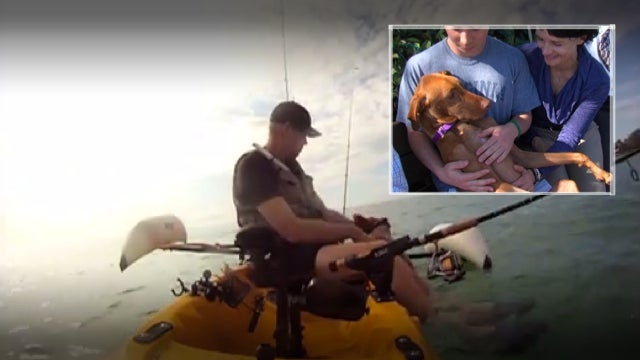 Meet Barney, The Miracle Dog Rescued From Ocean After Tragic Crash