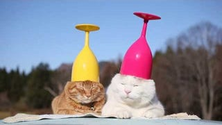 Yes We Need Cats With Wine Glasses on Their Heads