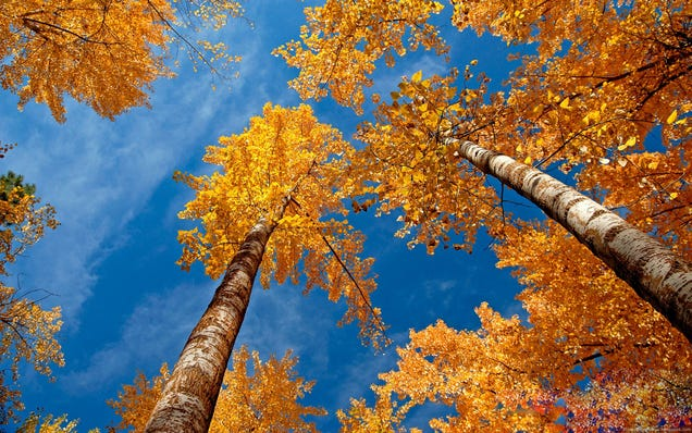 "Go ""Leaf Peeping"" with These Autumn Wallpapers"