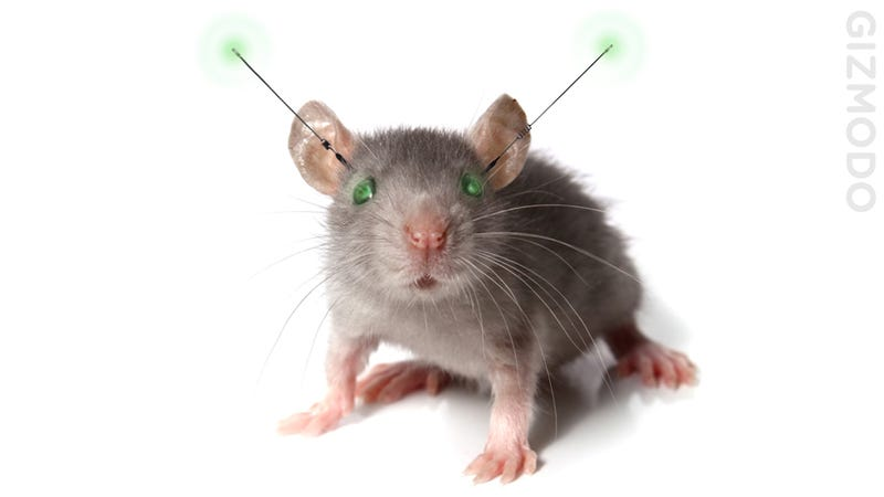 Remote Controlled Mice Today, Remote Controlled Humans Tomorrow