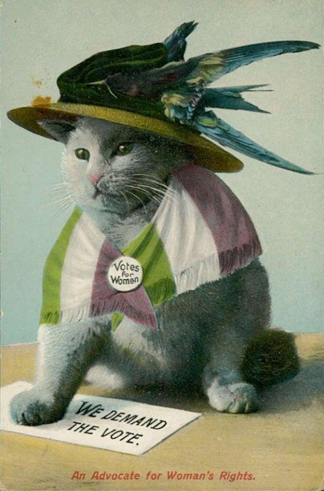 Suffragette Cats Are the Original Cat Ladies