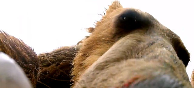 I love to spy on grizzly bears so close that I can count their teeth