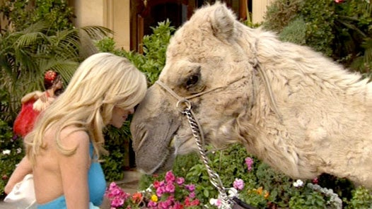 Real Housewives of Beverly Hills: At the Camel's Toe