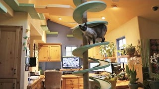 Man Spends Years Turning Home into Fun Zone for Rescue Cats
