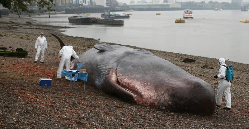 JPMorgan Hit With Puny $920M Fine Over 'London Whale' Debacle