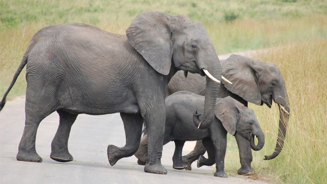 Elephants Have Social Networks
