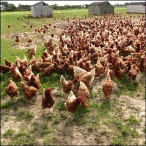 Hot Air Balloons Are Exploding Hens • Silicone Implants Linked To Lymphoma