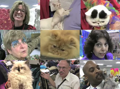 Attack Of The Cat People: On The Scene At The CFA-IAMS Cat Championship