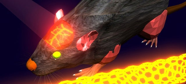 See Inside a Living Mouse Brain Thanks to Lasers and Carbon Nanotubes